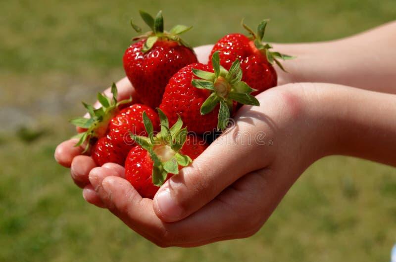 Pojken i händerna rymmer jordgubbar på bakgrunden av grönt gräs royaltyfria foton