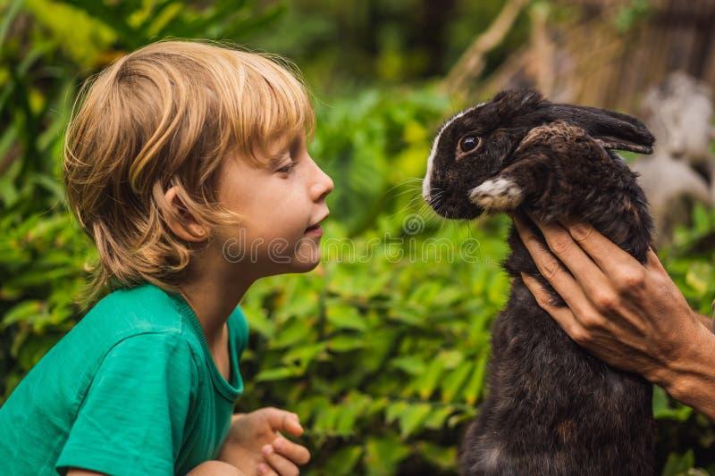 Pojken matar kaninen Skönhetsmedel testar på kanindjur Fri grymhet och djurt missbrukbegrepp f?r stopp royaltyfri fotografi