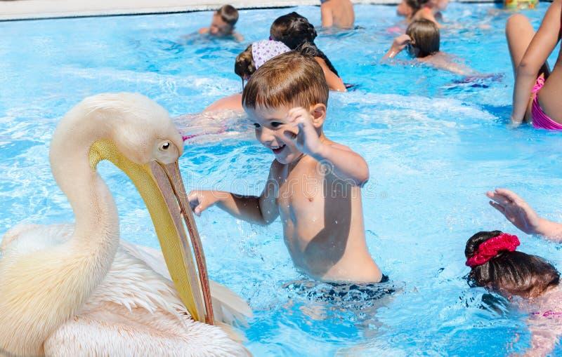 Pojken och en pelikan royaltyfria foton