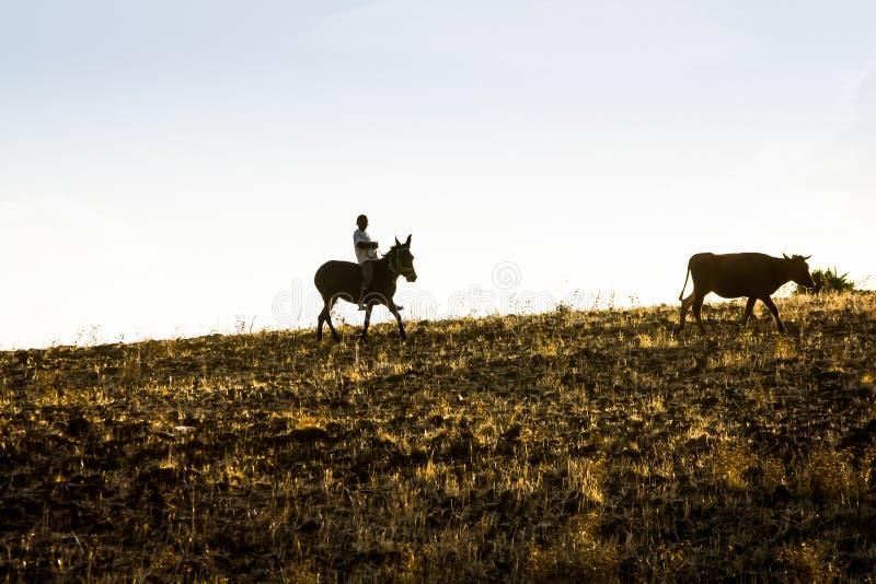 Pojkeridningåsna som går i solnedgång på morrocan fält fotografering för bildbyråer