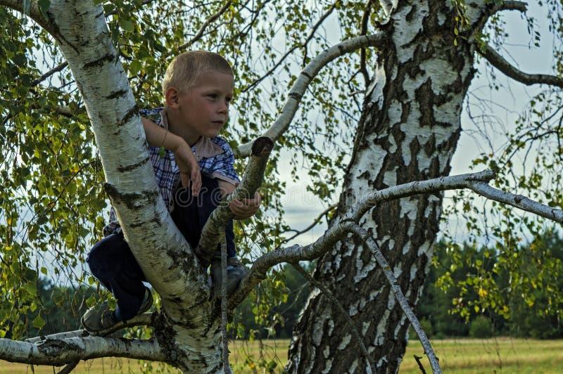 Pojkesammanträde på ett träd i träna arkivfoton