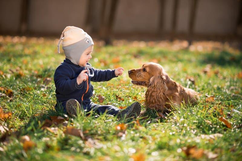 Pojkesammanträde på gräset med en hund royaltyfri foto