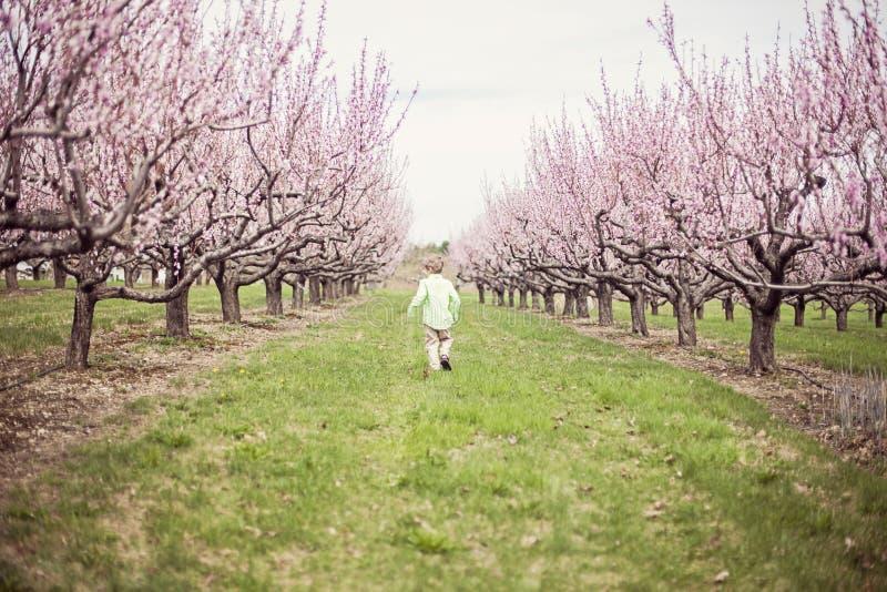 Pojkespring i persikafruktträdgård arkivbild