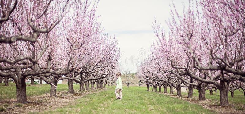Pojkespring i persikafruktträdgård royaltyfri fotografi