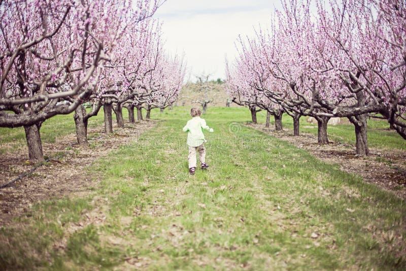 Pojkespring i persikafruktträdgård arkivfoton