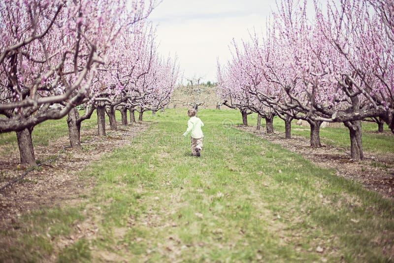Pojkespring i persikafruktträdgård royaltyfri foto