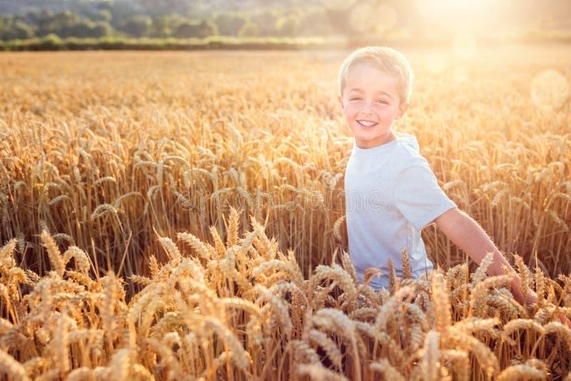 Pojkespring och le i vetefält i sommarsolnedgång royaltyfri foto
