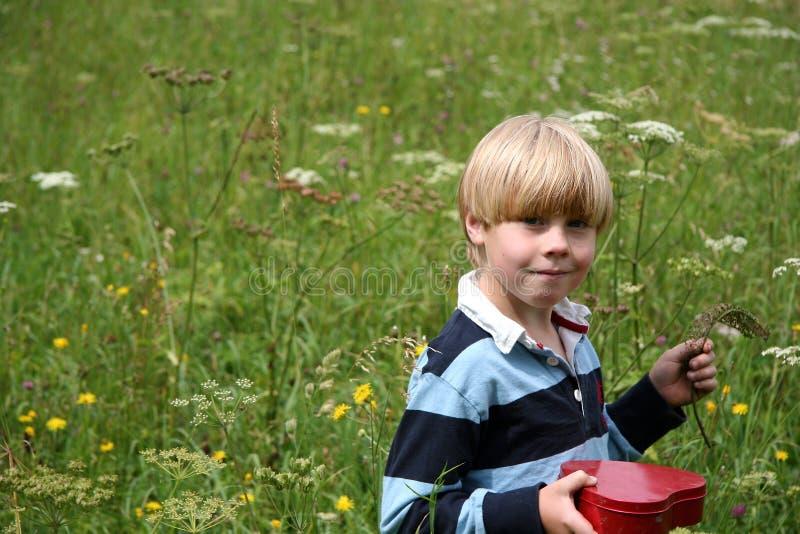 Download Pojkevildblommar arkivfoto. Bild av lawn, utanför, ungdom - 247496