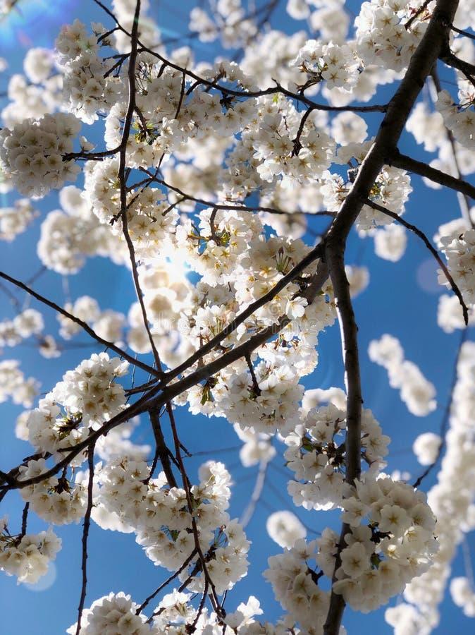 pokój wiosny niebo obrazy royalty free
