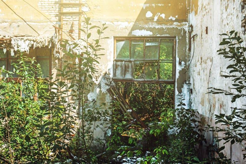 Pokój zaniechana fabryka bez dachu z łamanymi okno, przerastający z roślinami obrazy royalty free