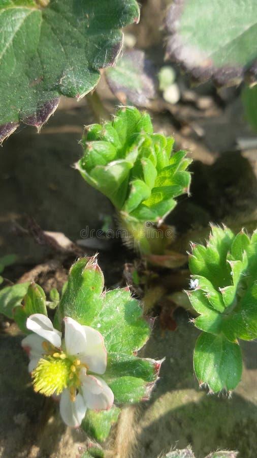 Poka van de bloemenbomen van aardinsecten stock foto's