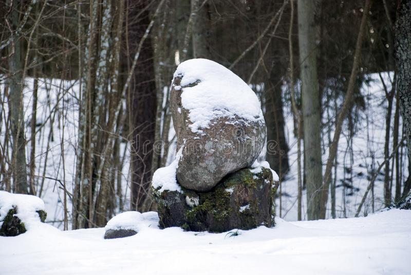 Pokaini forest in winter. Latvia. Ancient stones. Pokaini forest, a mysterious part of the Zemgale woods. Pokaini forest in winter. Latvia. Ancient stones stock image