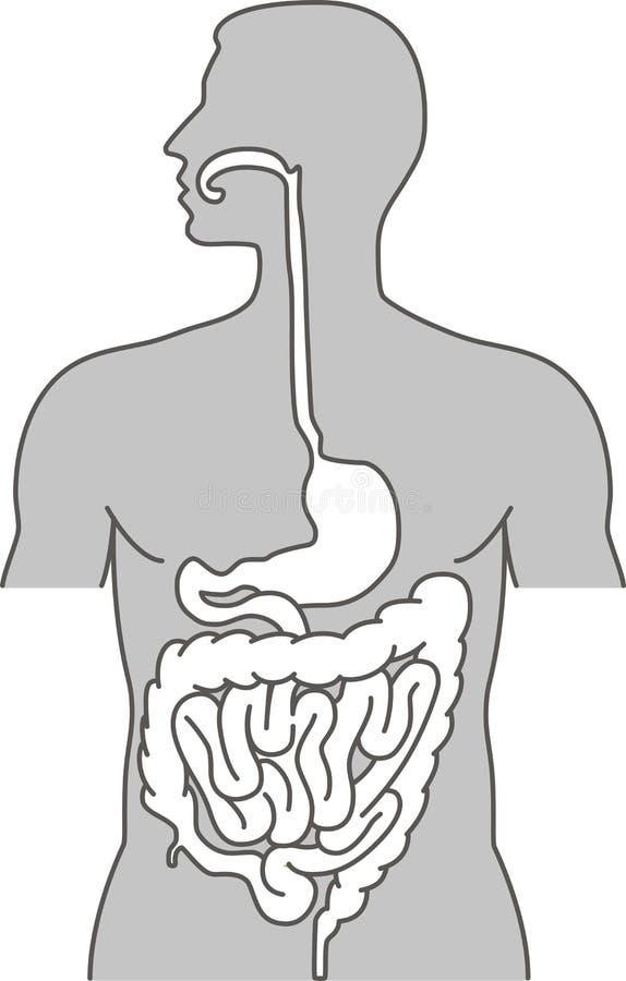 pokarmowy ludzki system ilustracja wektor