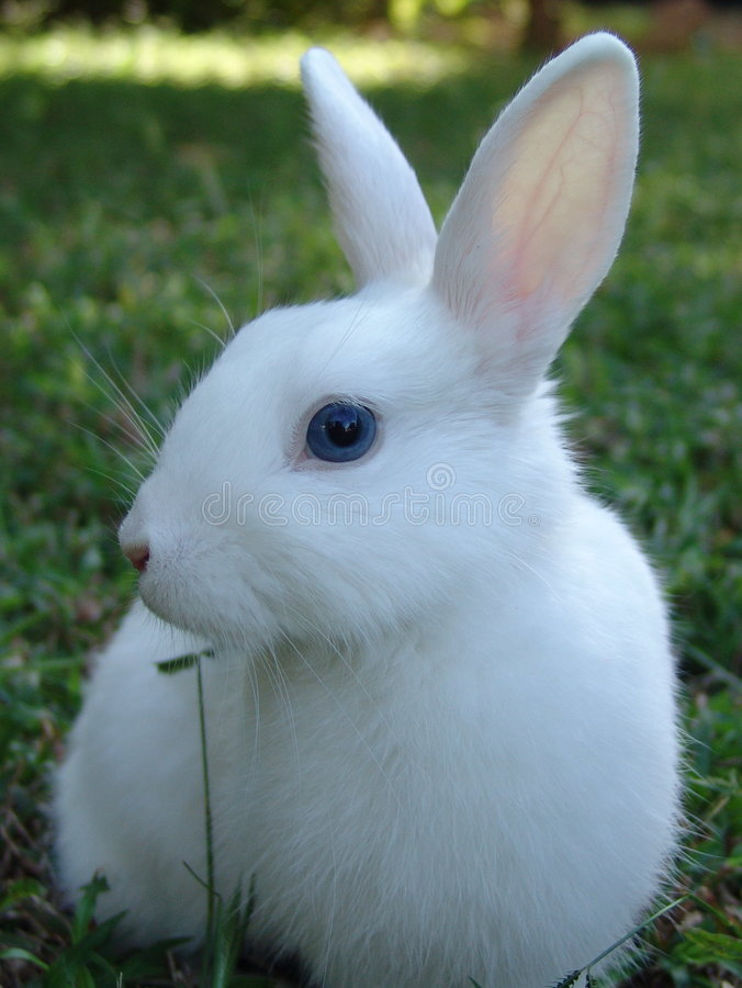 pokaz mody królika obrazy stock