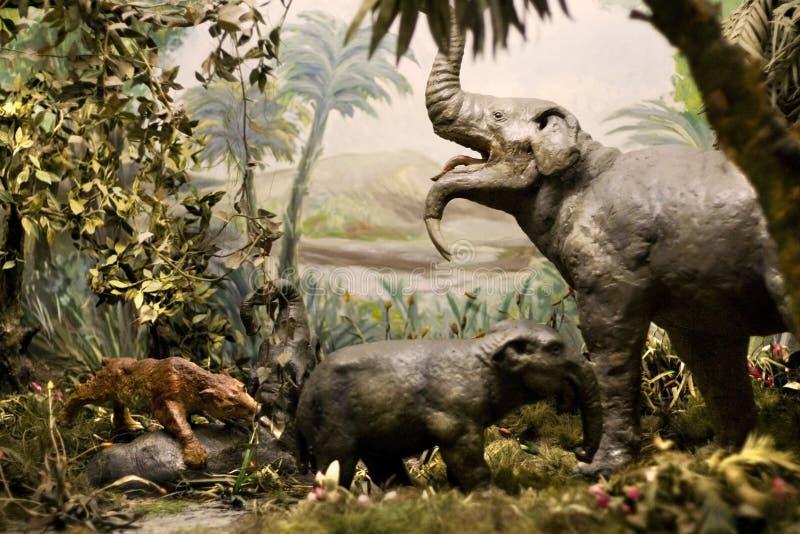pokaz muzeum historii naturalnej obraz royalty free