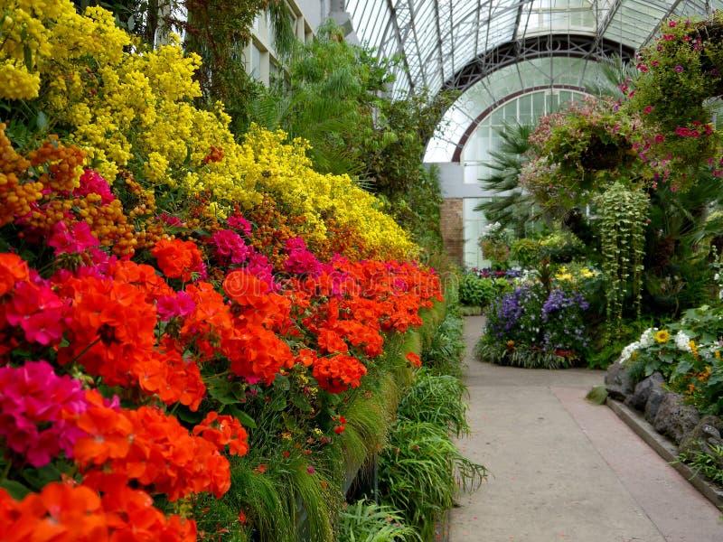 pokazu kwiatu ogródu glasshouse h historyczny zdjęcia royalty free