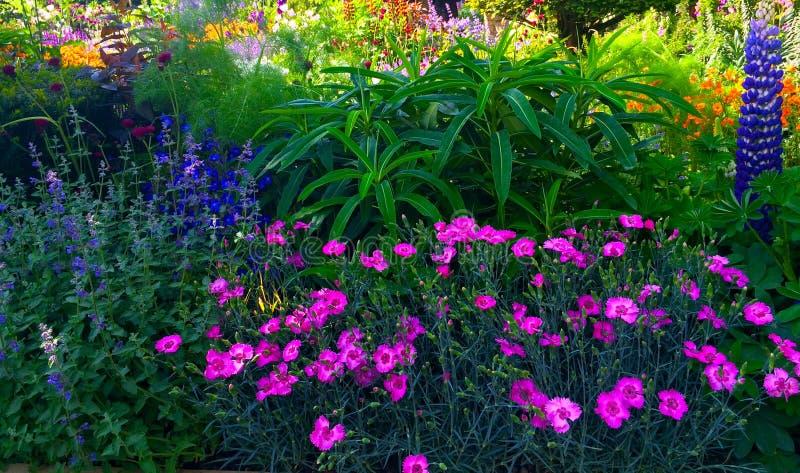 Pokazuje ogród z lato kwiatami zdjęcie stock