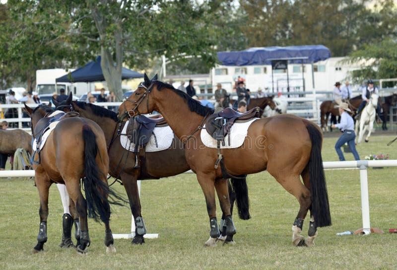 Pokazuje skokowych konie czeka mieć plotki obrazy stock