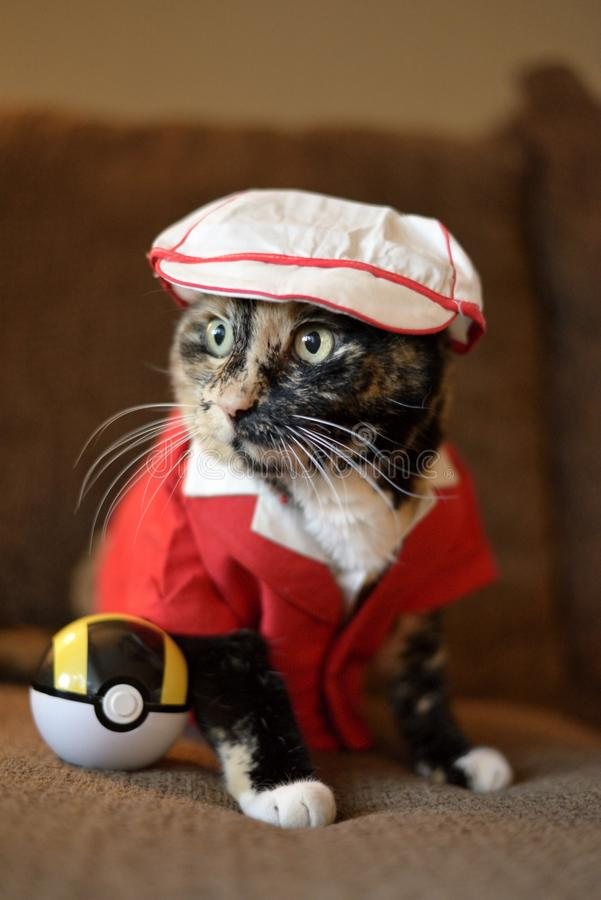 Pokemon Hunter Cat. We dressed up our cat and put our sons Pokemon Ultra Ball next to her and have dubbed her the mighty Pokemon Hunter Cat stock photo
