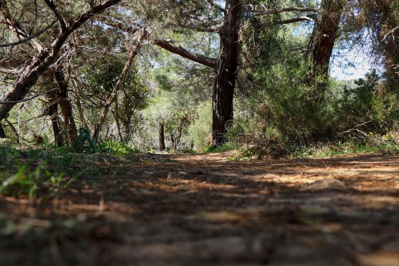 Pokojowa i relaksująca lasowa droga na niektóre wzgórzu Cudowny jorney wokoło Cypr natury Powabny odprowadzenie w Akamas półwysep obraz stock