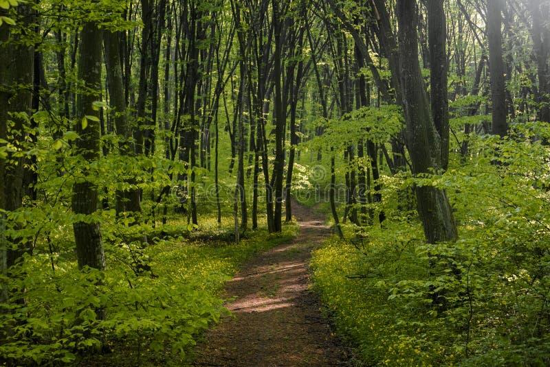 Pokojowa lasowa ścieżka obrazy royalty free