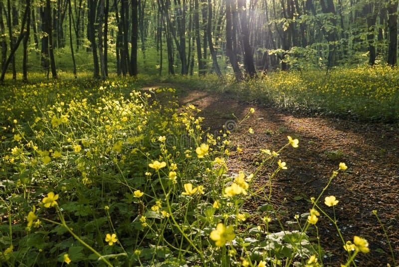 Pokojowa lasowa ścieżka obraz stock