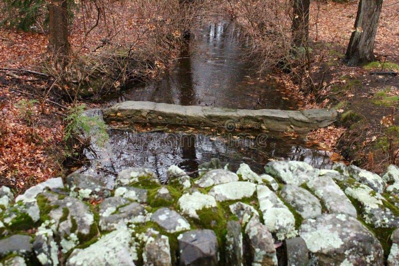 Pokojowa rzeka Chująca w drewnach zdjęcia royalty free