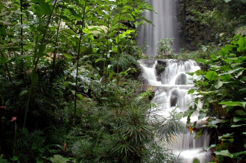 pokojowej wodospadu obraz royalty free