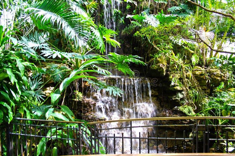 pokojowej wodospadu zdjęcia royalty free