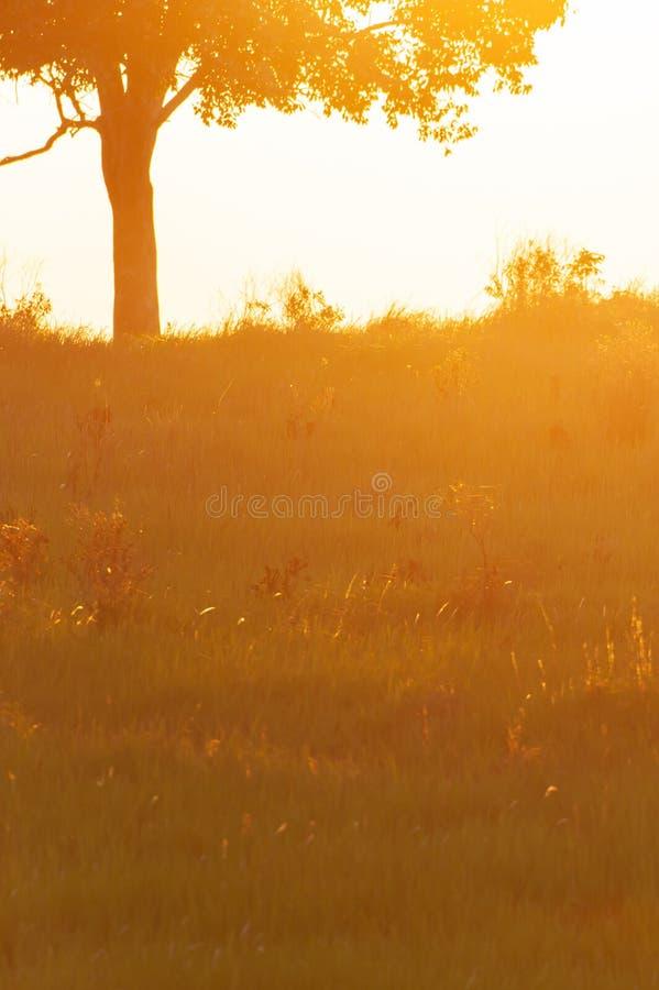 Pokojowy czas, Piękny obszar trawiasty przy słońca położeniem, tropikalny drzewa tło Kolorowy sceniczny krajobraz w lato sezonie  obraz royalty free
