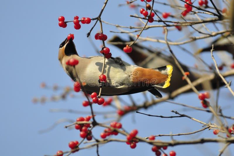 Pokoju ptak zdjęcia royalty free