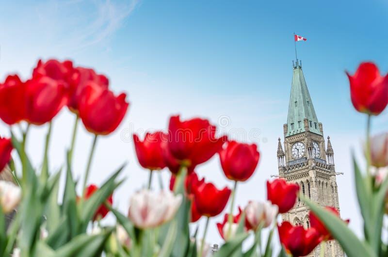 Pokoju wierza parlamentu budynek w Ottawa obrazy royalty free