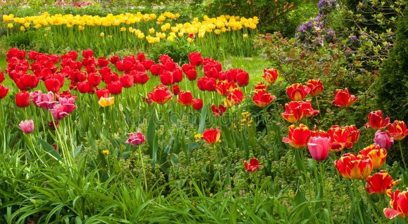 Pokos tulipany obraz stock