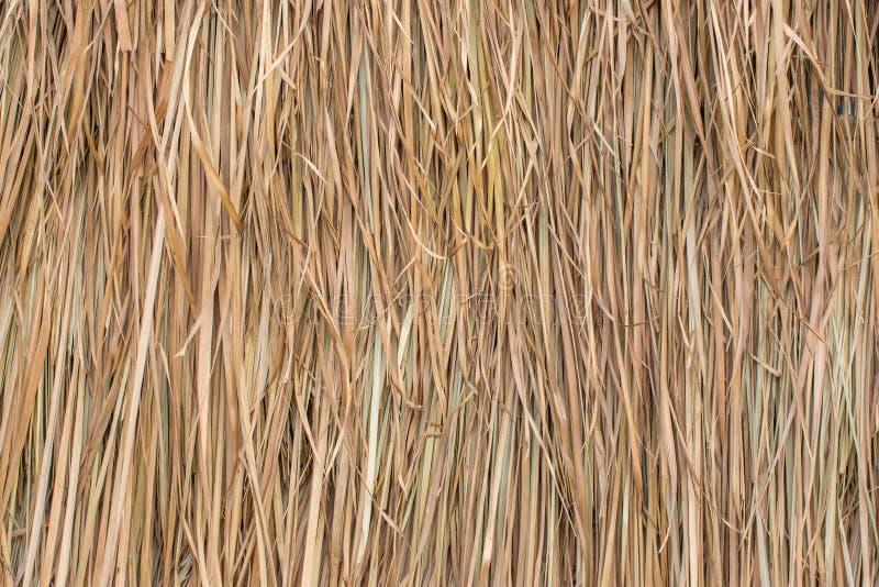 Pokrywający strzechą dach robić od liści trawa obraz royalty free