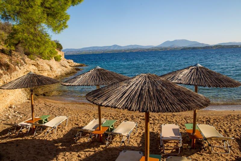 Pokrywający strzechą dachowi plażowi krzesła i, sosny zdjęcie royalty free