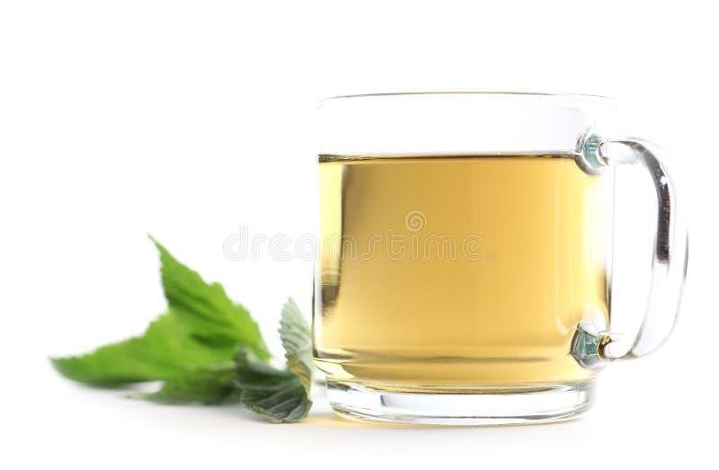 pokrzywowa herbata obrazy stock