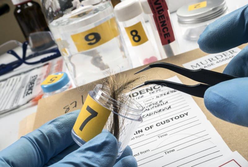 A polícia especializada analisa o cabelo da vítima de assassinato com pinça foto de stock