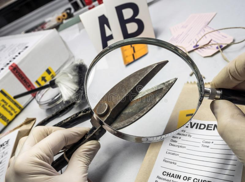 A polícia perita examina com tesouras de poda da lupa no equipamento judicial do laboratório fotografia de stock royalty free