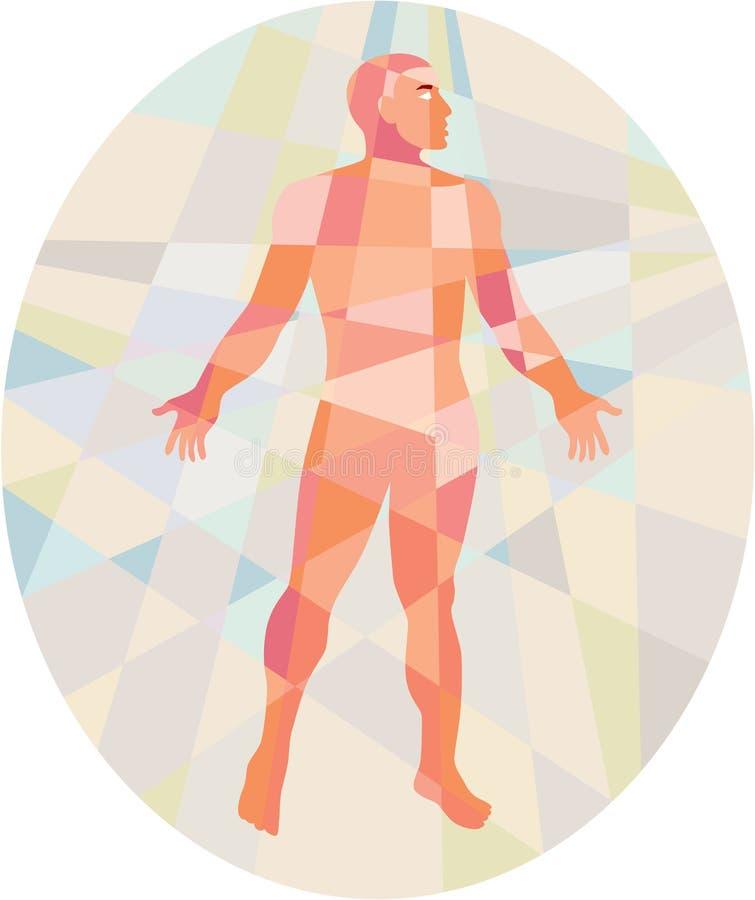 Polígono Bajo Oval Masculino De La Anatomía Gruesa Stock de ...