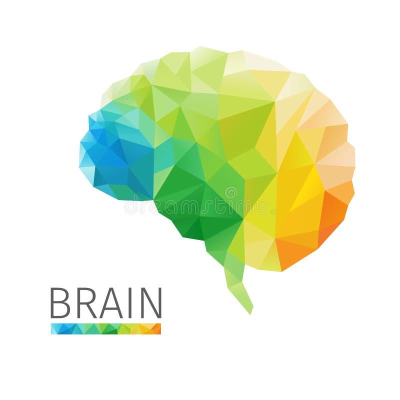 Polígono del cerebro ilustración del vector