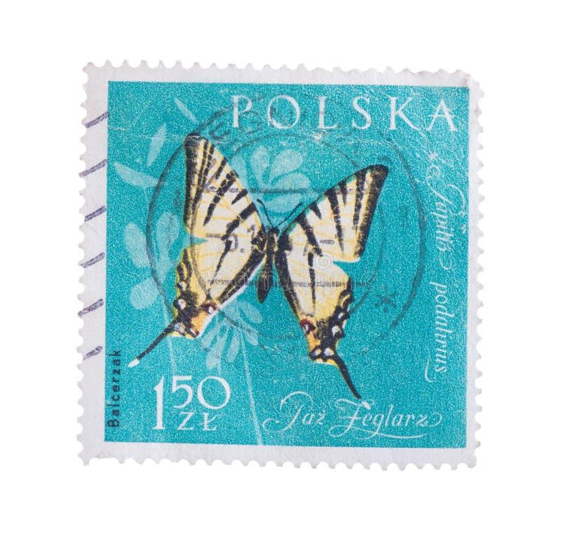 POLÔNIA - CERCA DE 1961: Um selo impresso perto, borboleta das mostras, fotos de stock