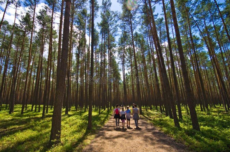 Polônia de Roztocze, madeiras e ângulo largo das florestas fotos de stock