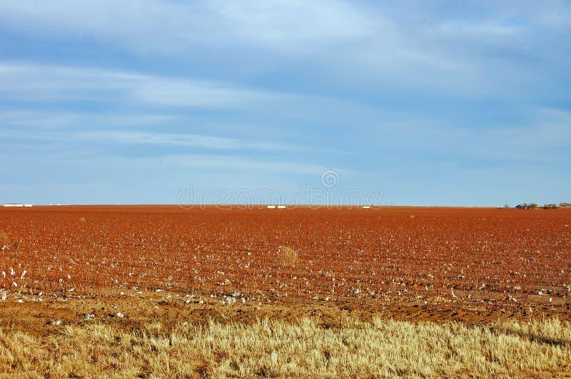 pola bawełny krajobrazu zdjęcie royalty free