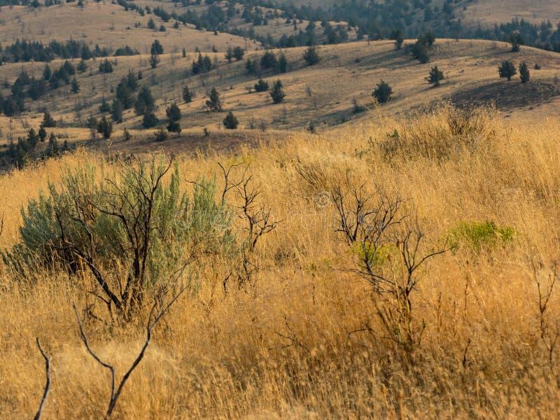Pola i drzewa na tocznych wzgórzach zdjęcie stock