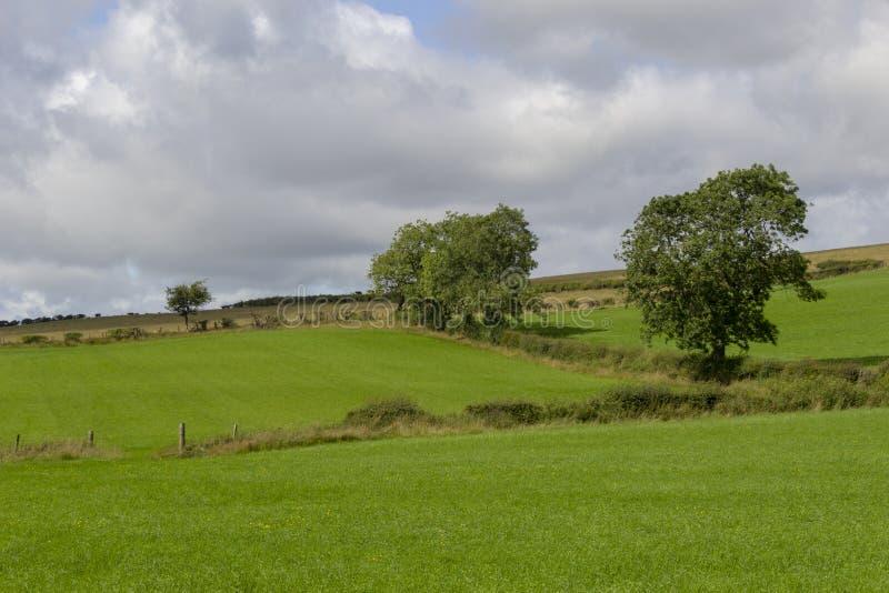 Pola z hedgerows i drzewami fotografia royalty free