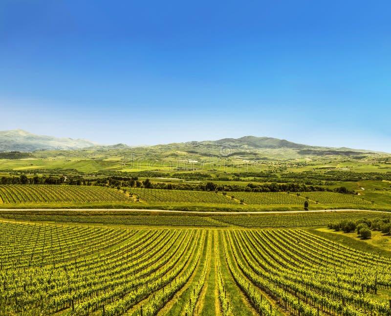 Pola z winnicami Tuscany, zdjęcia royalty free