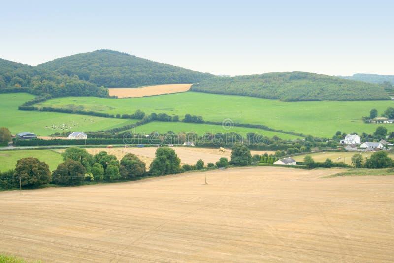 pola zielenieją Ireland obraz royalty free