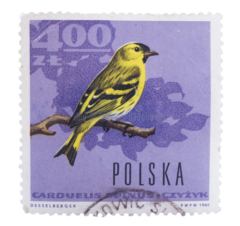 POLAND - CIRCA 1966: A stamp printed in shows European go. POLAND - CIRCA 1966: A stamp printed in Poland shows European golden oriole with the inscription royalty free stock images