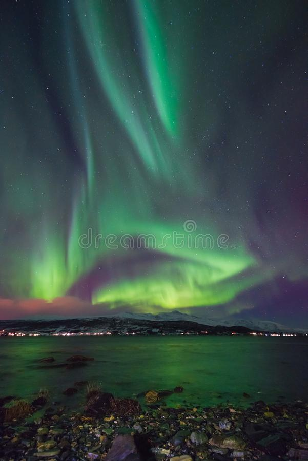 Polar arctic Northern lights aurora borealis sky star in Scandinavia Norway Tromso in the farm winter snow mountains royalty free stock photo