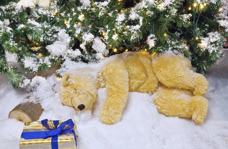 The polar bear. Is sleeping under the Christmas tree royalty free stock photography